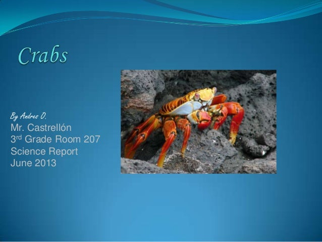 Crabs by andres