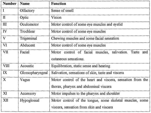 Cranial nerves function defects of cranial nerve