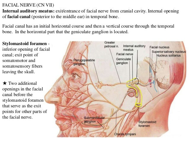7321542 also 38 additionally Cranial Nerves Overview 2013 further 5 Cns 1 9994940 in addition 395172 Overview. on spinal cavity