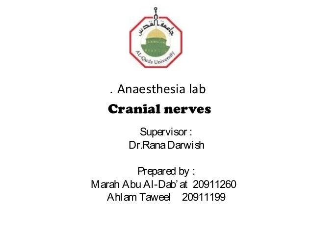 . Anaesthesia lab   Cranial nerves         Supervisor :       Dr.Rana Darwish        Prepared by :Marah Abu Al-Dab' at 209...