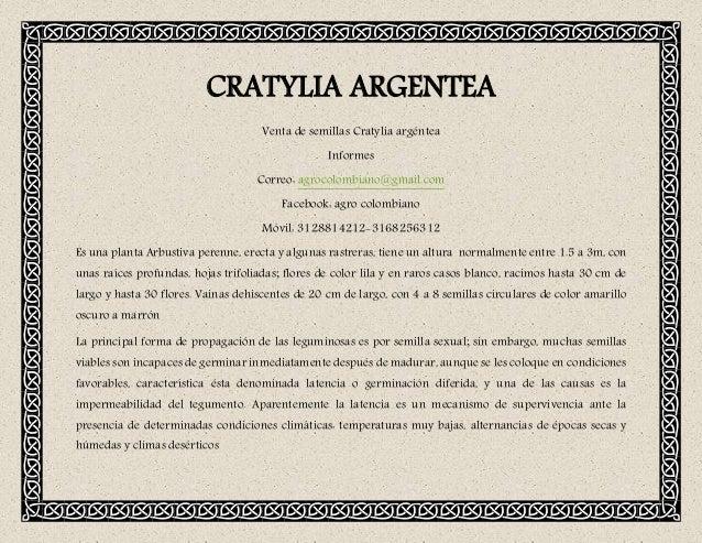 CRATYLIA ARGENTEA Venta de semillas Cratylia argéntea Informes Correo: agrocolombiano@gmail.com Facebook: agro colombiano ...