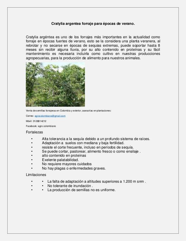 Cratylia argentea forraje para épocas de verano. Cratylia argéntea es uno de los forrajes más importantes en la actualidad...