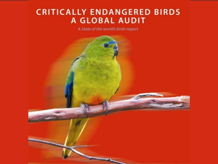 A State of the world's birds report   Critically Endangered birds: a global audit