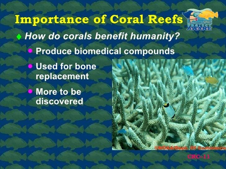 the advantages of coral reefs for Climate action benefits: coral reefs coral reefs, including those found in hawaii and the caribbean, are unique ecosystems that are home to large numbers of marine plant and animal species they also provide vital fish spawning habitat, protect shorelines, and are valuable for recreation and tourism.