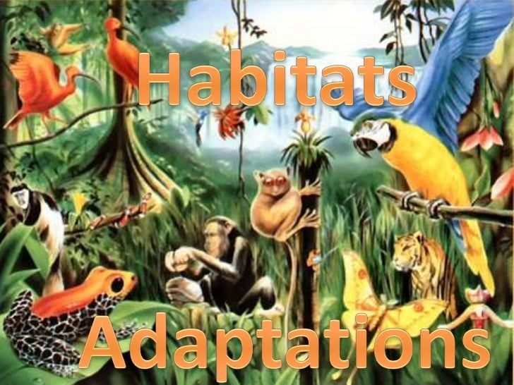 Design an Animal– Use what you know about habitat adaptations to  design an animal for your chosen planet– You will use Po...
