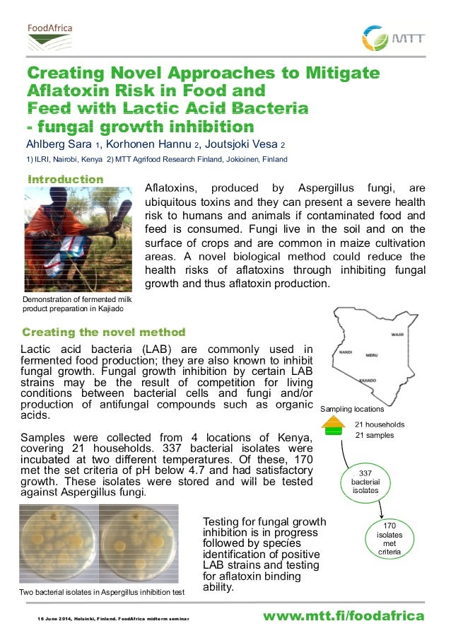 Creating Novel Approaches to Mitigate  Aflatoxin Risk in Food and  Feed with Lactic Acid Bacteria  - fungal growth inhibit...