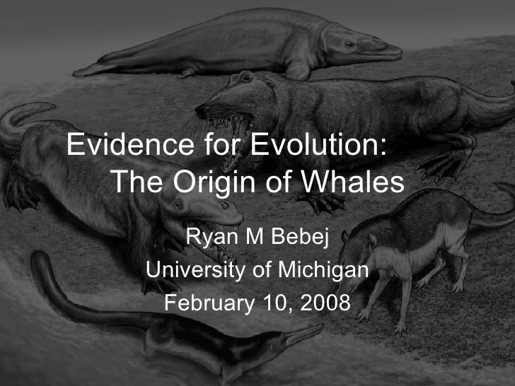 Evidence for Evolution:  The Origin of Whales Ryan M Bebej University of Michigan February 10, 2008