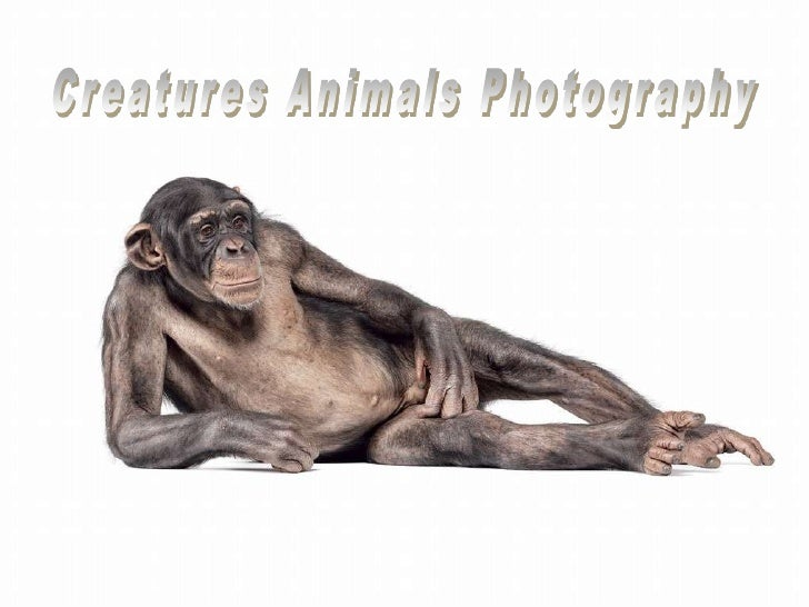 Creatures Animals Photography<br />