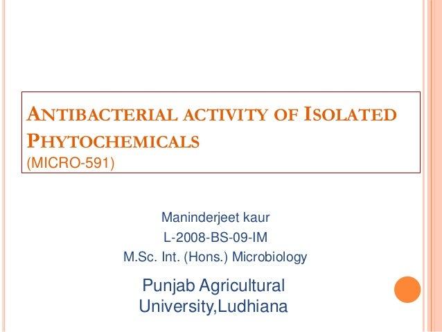ANTIBACTERIAL ACTIVITY OF ISOLATEDPHYTOCHEMICALS(MICRO-591)Maninderjeet kaurL-2008-BS-09-IMM.Sc. Int. (Hons.) Microbiology...