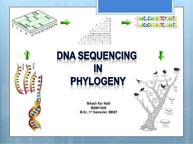 DNA Sequencing in Phylogeny