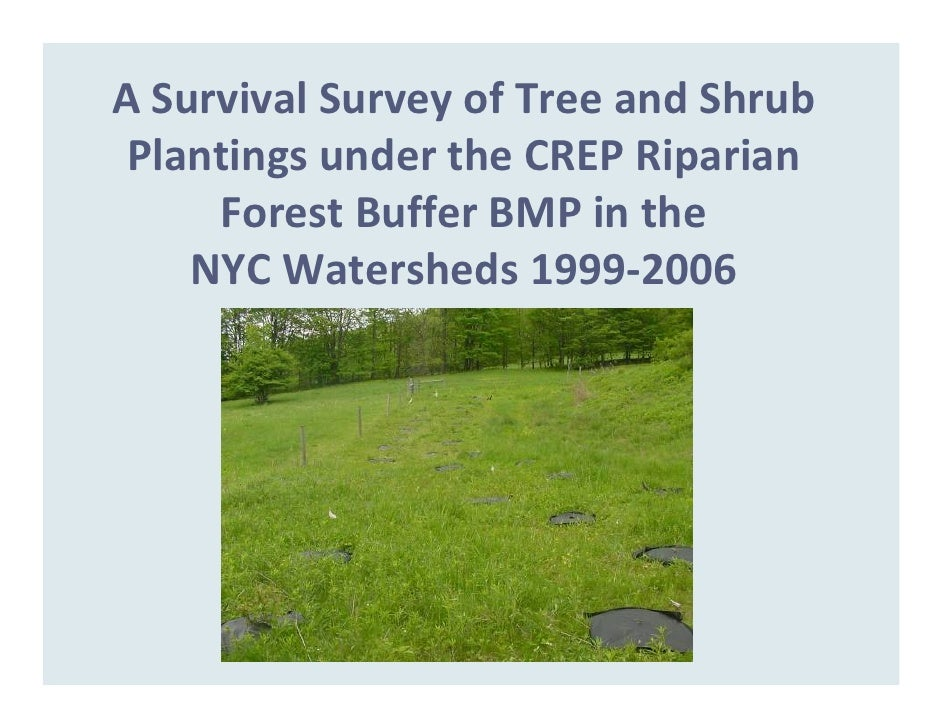 A Survival Survey of Tree and Shrub   Plantings under the CREP Riparian       Forest Buffer BMP in the      NYC Watersheds...