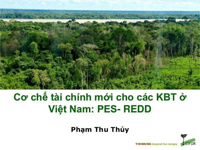 THINKING beyond the canopy Cơ chế tài chính mới cho các KBT ở Việt Nam: PES- REDD Phạm Thu Thủy