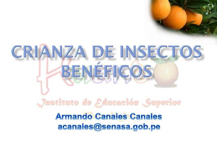 Crianza Insectos Benéficos II