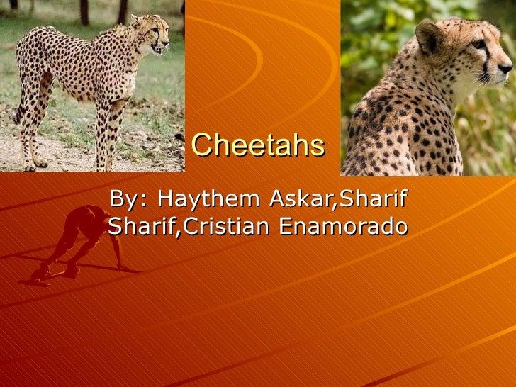 Cheetahs By: Haythem Askar,Sharif Sharif,Cristian Enamorado