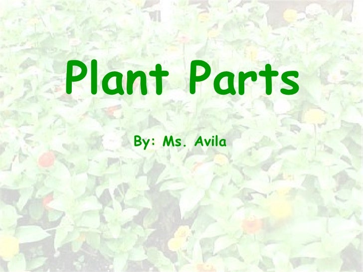 Plant Parts By: Ms. Avila