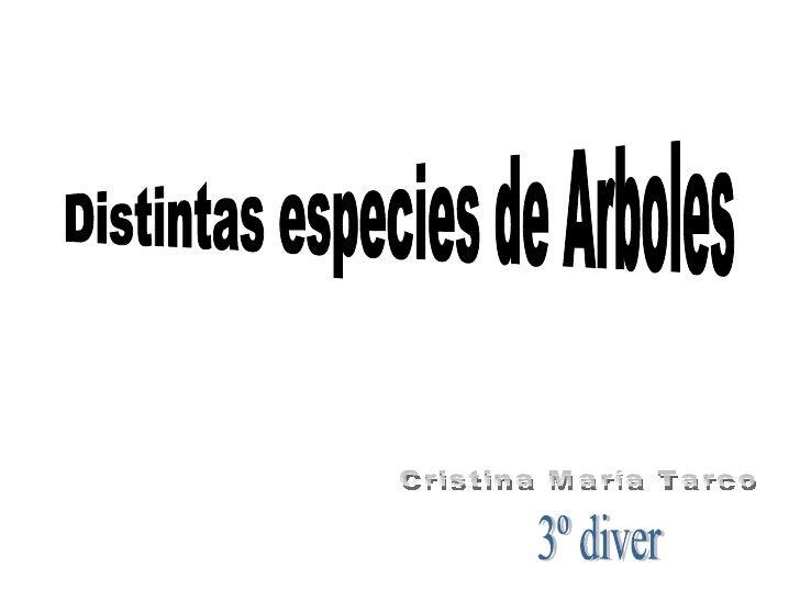 Distintas especies de Arboles Cristina María Tarco 3º diver