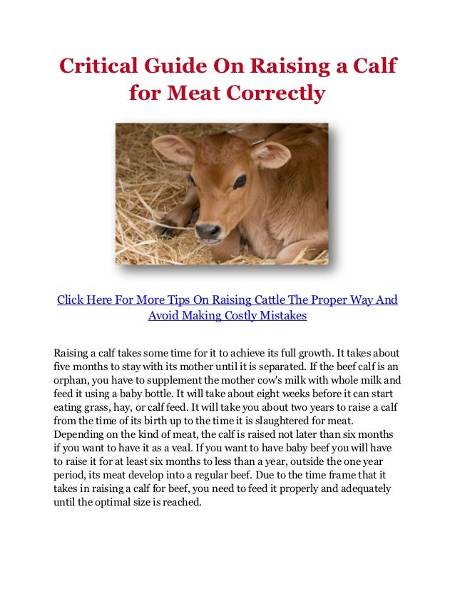 Critical Guide On Raising a Calf        for Meat CorrectlyClick Here For More Tips On Raising Cattle The Proper Way And   ...