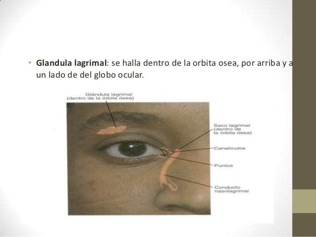La acupuntura a la osteocondrosis en bryanske