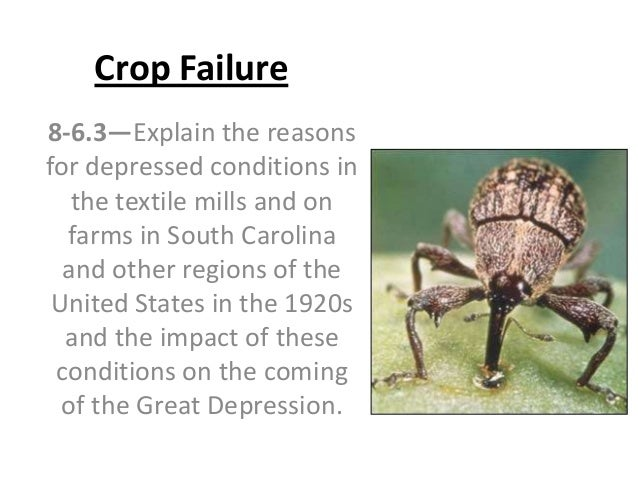 Crop Failure 8-6.3—Explain the reasons for depressed conditions in the textile mills and on farms in South Carolina and ot...