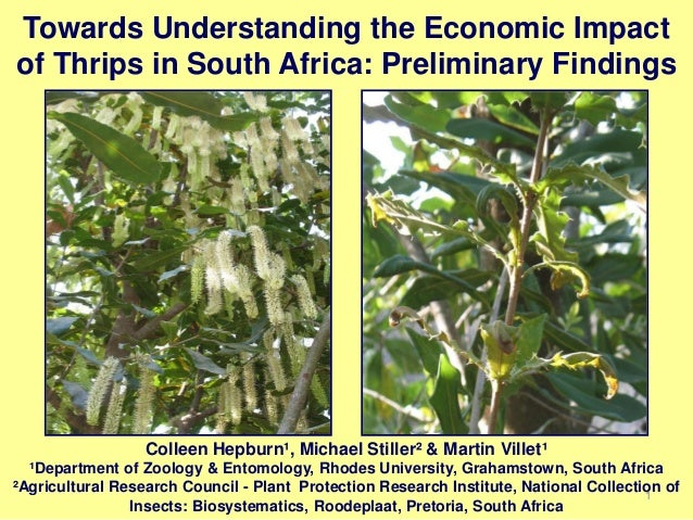 Crop protection   assessment of thrips species complex and economic loss in macadamia orchards in south africa - colleen hepburn