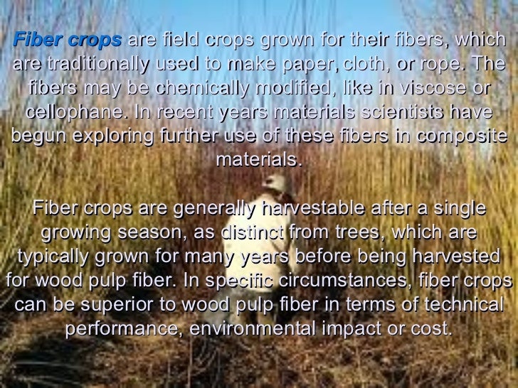 Field Crops List Fiber Crops Are Field Crops