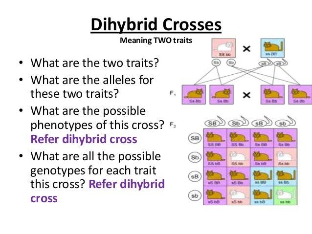 Crosses and pedigrees
