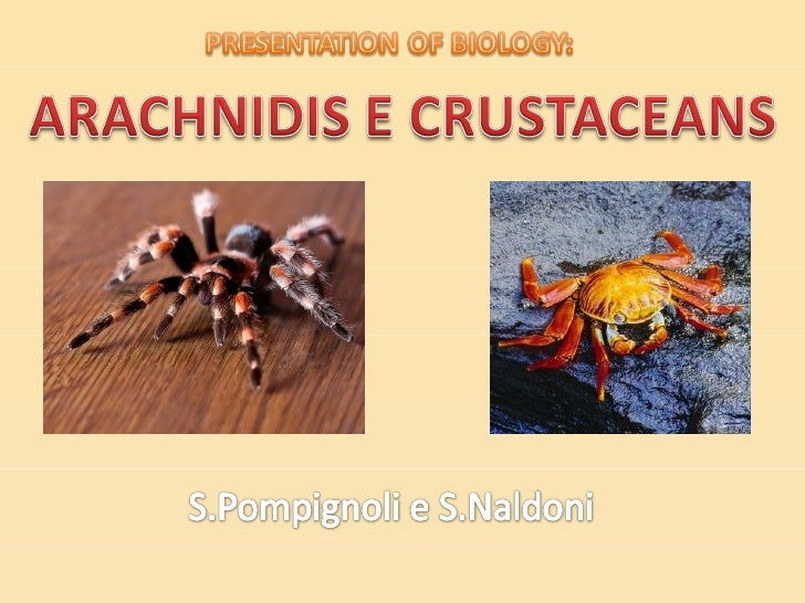 •Crustaceans      is a very large group ok arthropods, whichincludes: crabs, crayfish, krill and barnacles•They are distin...