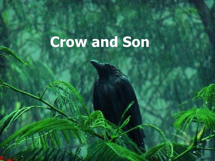 Crow and Son
