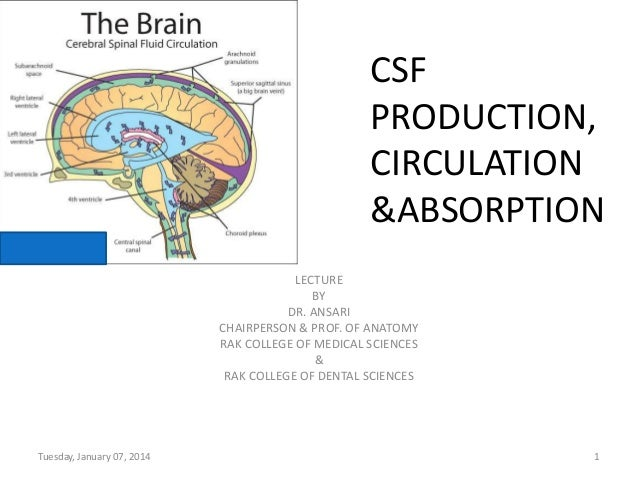 CSF PRODUCTION, CIRCULATION &ABSORPTION LECTURE BY DR. ANSARI CHAIRPERSON & PROF. OF ANATOMY RAK COLLEGE OF MEDICAL SCIENC...
