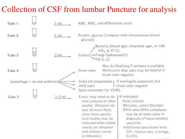Lumbar puncture procedure note template 28 images csf lumbar puncture procedure note template csf seminar pronofoot35fo Choice Image