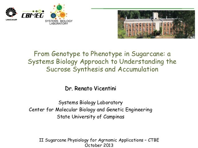 From Genotype to Phenotype in Sugarcane: a Systems Biology Approach to Understanding the Sucrose Synthesis and Accumulatio...