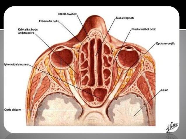 Venous sinus anatomy