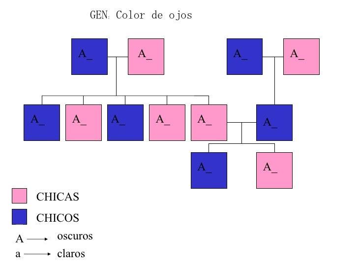 GEN: Color de ojos CHICAS CHICOS A a oscuros claros A_ A_ A_ A_ A_ A_ A_ A_ A_ A_ A_ A_