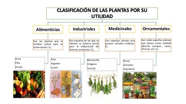 DE LAS PLANTAS POR SUUTILIDADAlimenticiasSon las plantas