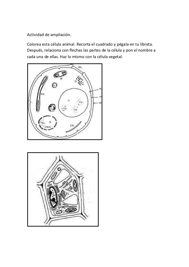 Excepcional Página Para Colorear De Células Vegetales Colección ...