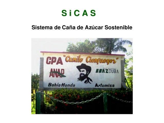 1303 SiCAS Sistema de Caña de Azúcar Sostenible