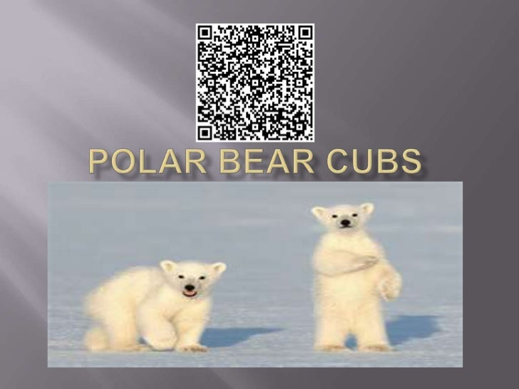 1.   A baby polar bear looks like. It has white fur and     a little bit of gray. It has a Black nose and black     eyes.