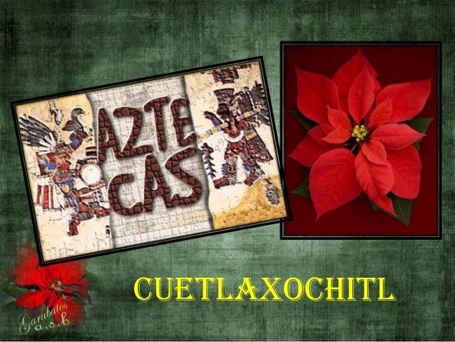 Cuetlaxochitl (History of the Poinsettia.Historia de la Flor de Pascua)