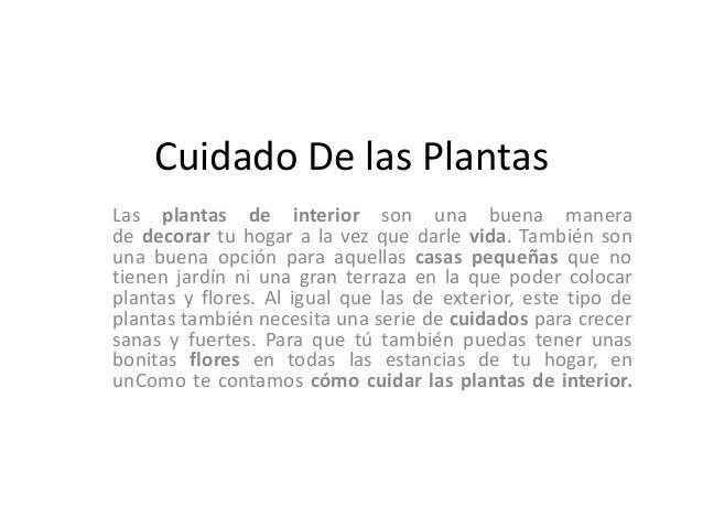 Cuidado de las plantas - Cuidado de plantas de interior ...