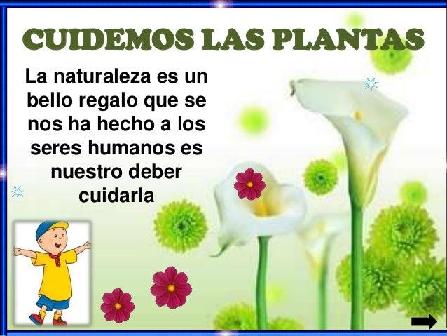 Cuidemos las plantas