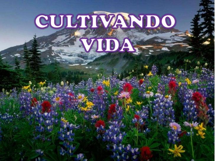 CULTIVANDO VIDA<br />