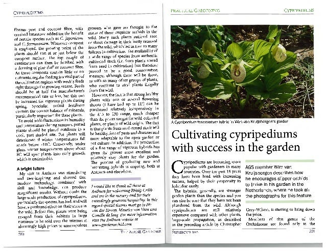 Cultivating cypripediums with success in the garden