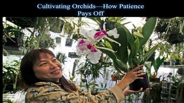 Cultivating orchids