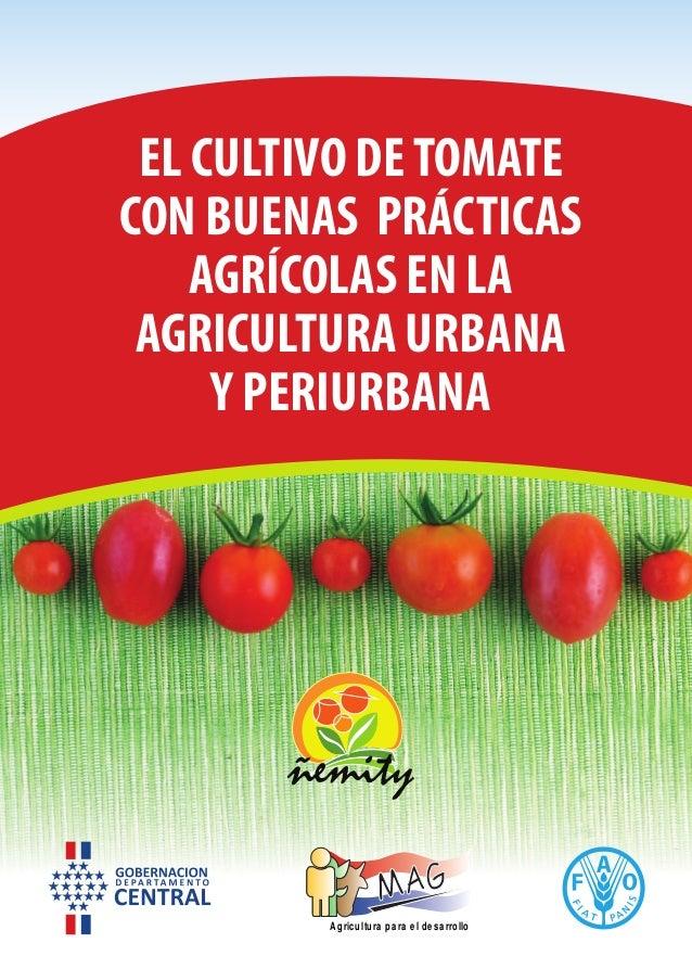 EL CULTIVO DETOMATE CON BUENAS PRÁCTICAS AGRÍCOLAS EN LA AGRICULTURA URBANA Y PERIURBANA Agricultura para el desarrollo