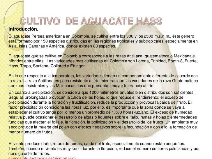 Introducción.El aguacate Persea americana en Colombia, se cultiva entre los 300 y los 2500 m.s.n.m., éste géneroestá forma...
