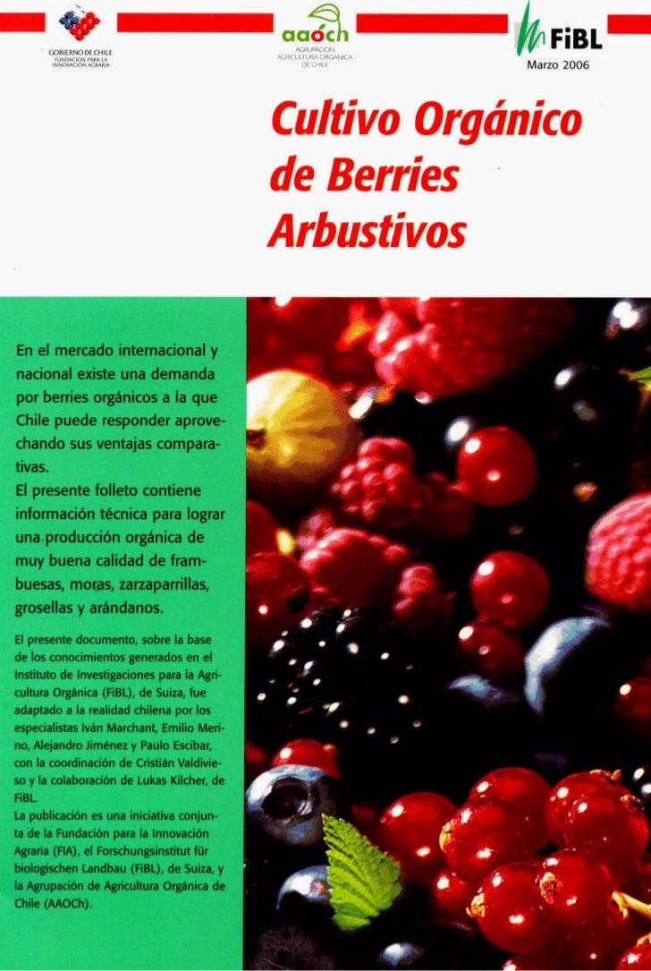 Cultivo de berries organico