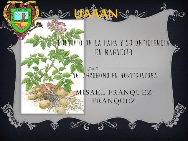 CULTIVIO DE LA PAPA Y SU DEFICIENCIA EN MAGNECIO ING. AGRONOMO EN HORTICULTURA MISAEL FRANQUEZ FRANQUEZ UAAAN