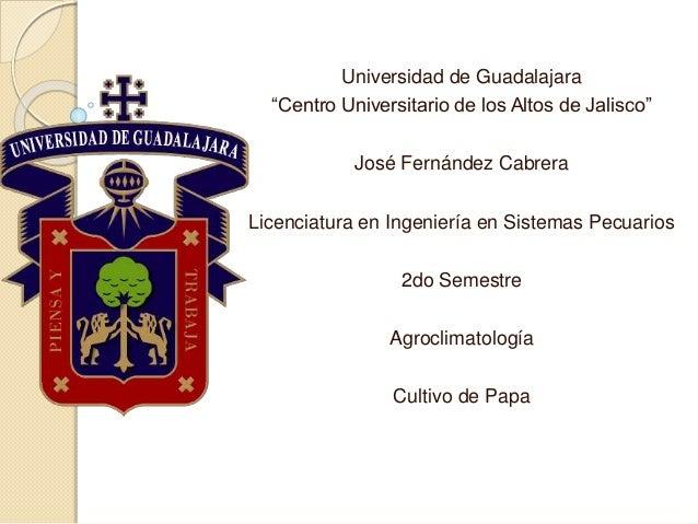 """Universidad de Guadalajara """"Centro Universitario de los Altos de Jalisco"""" José Fernández Cabrera Licenciatura en Ingenierí..."""