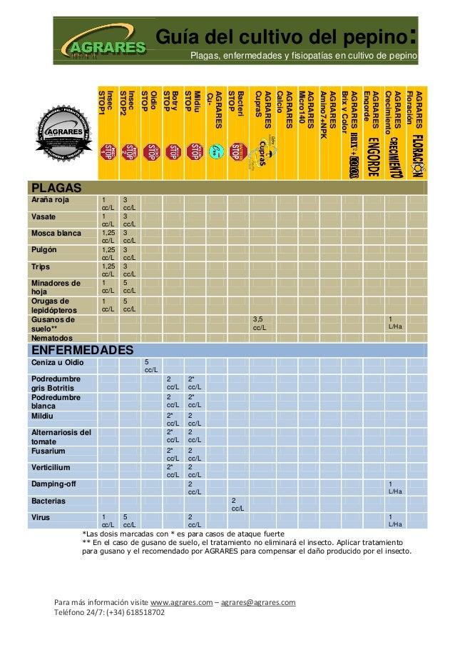 Guía del cultivo del pepino:                                                      Plagas, enfermedades y fisiopatías en cu...