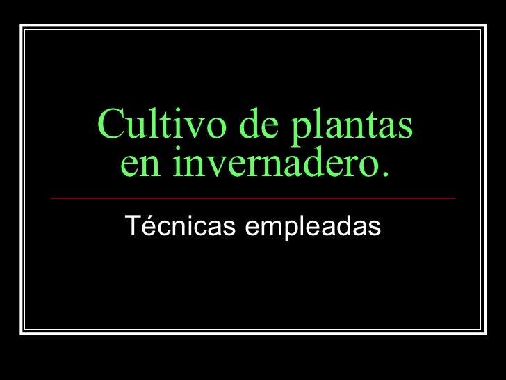 Cultivo de plantas en invernadero Plantas de invernadero